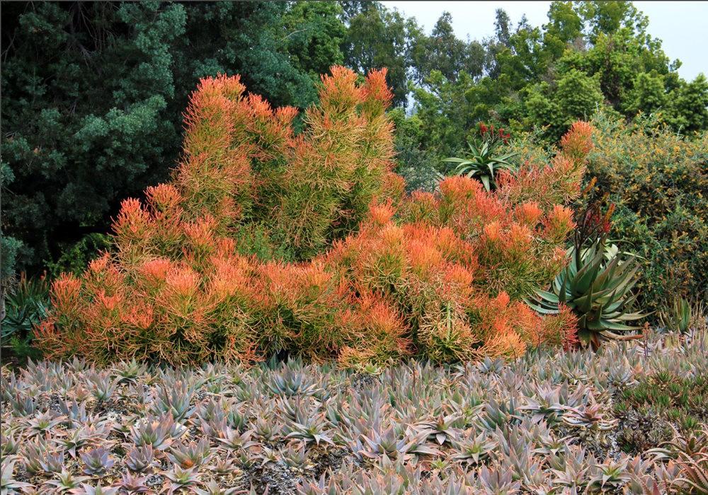 洛杉矶县植物园的辉煌_图1-31