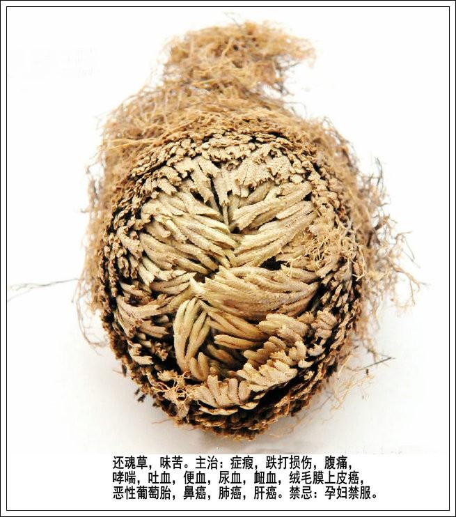 赞草药郎中王正鹏(七律三首)_图1-3