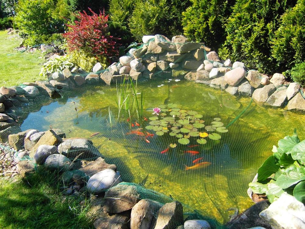 戴安娜的池塘_图1-1
