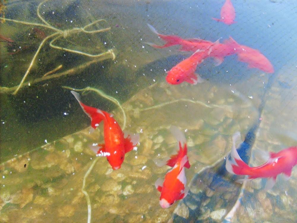 戴安娜的池塘_图1-3