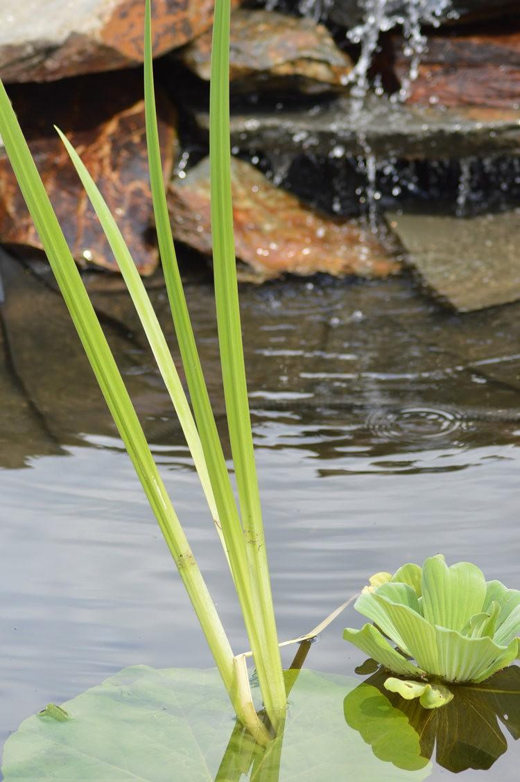戴安娜的池塘_图1-6