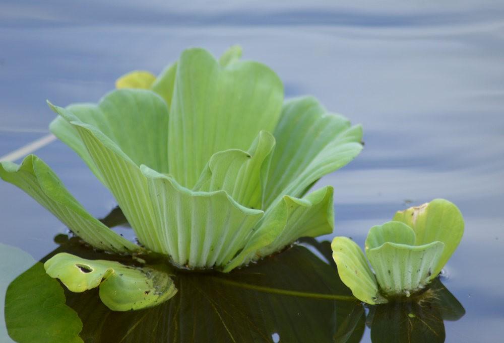 戴安娜的池塘_图1-8