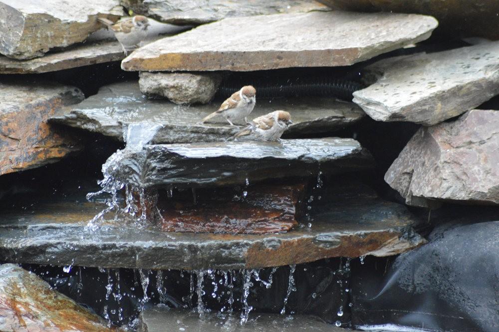 戴安娜的池塘_图1-11