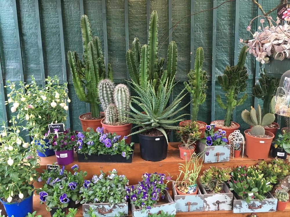 在巴黎见到的卖花市集_图1-6