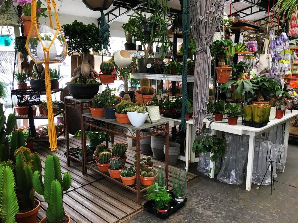 在巴黎见到的卖花市集_图1-10