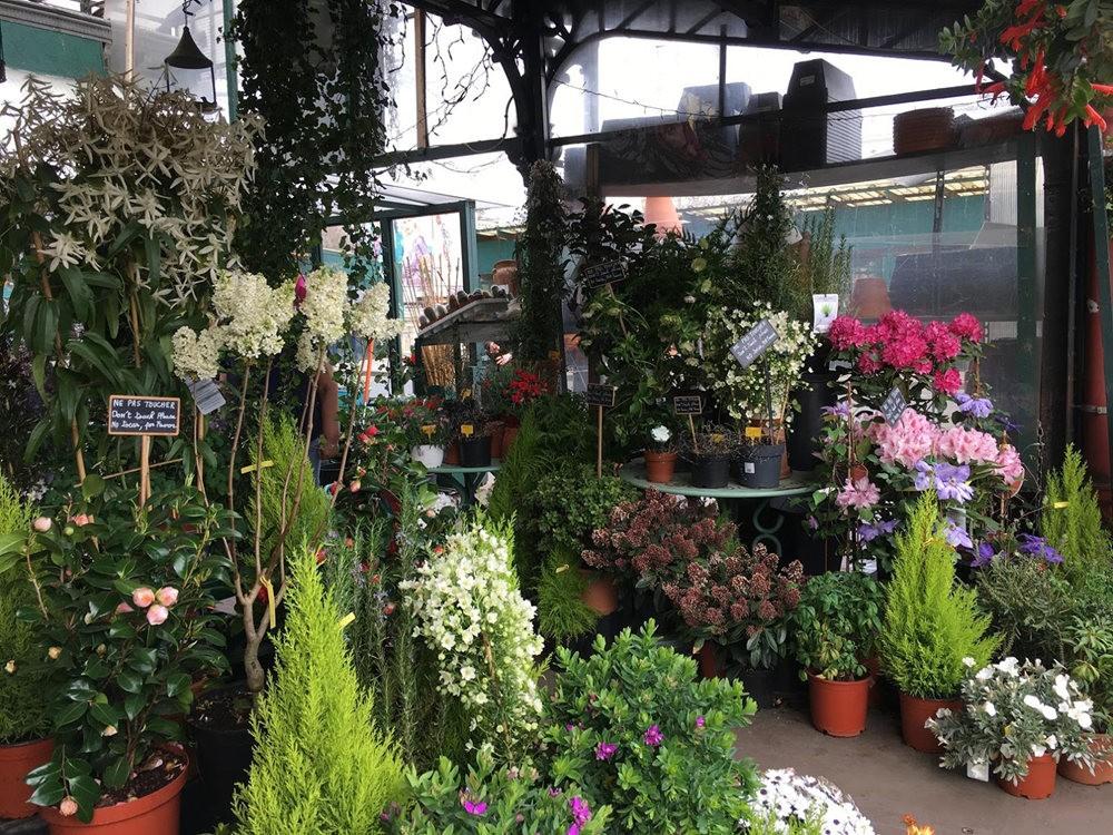 在巴黎见到的卖花市集_图1-16