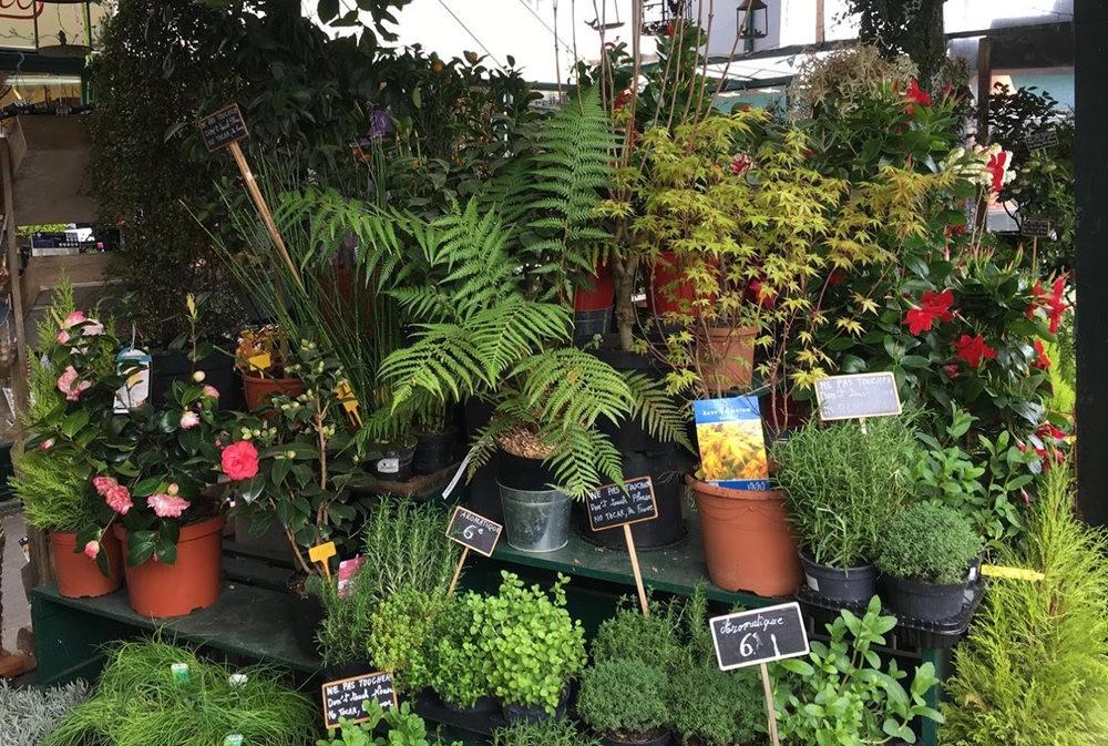 在巴黎见到的卖花市集_图1-17