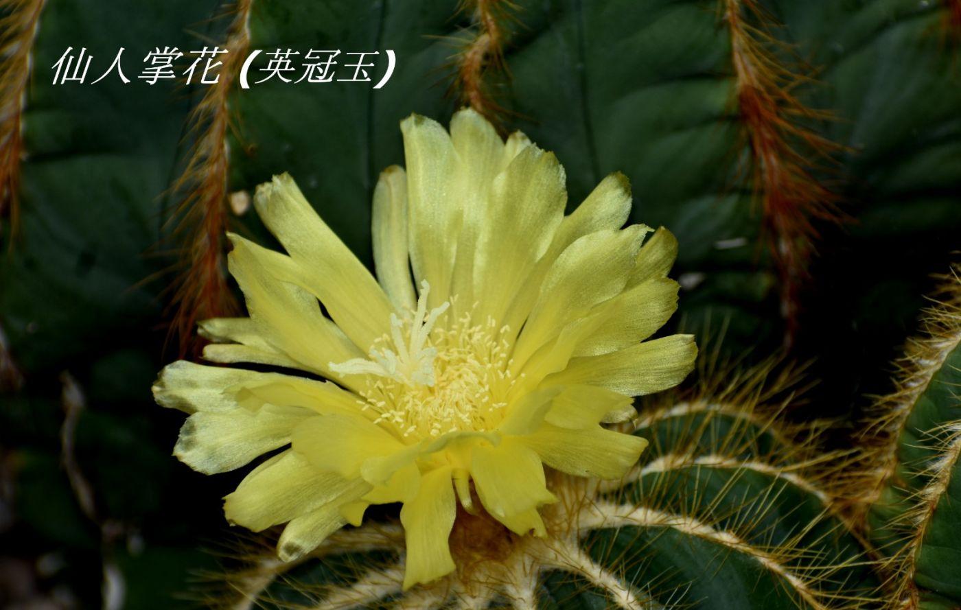 花草图谱 (1)_图1-24