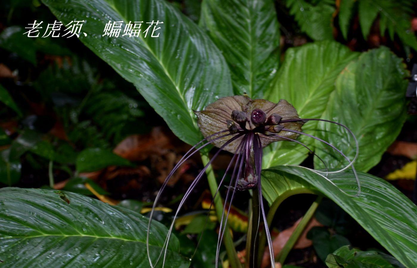花草图谱 (1)_图1-25