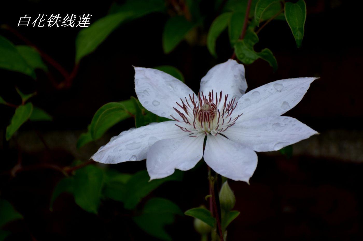 花草图谱 (2)_图1-6