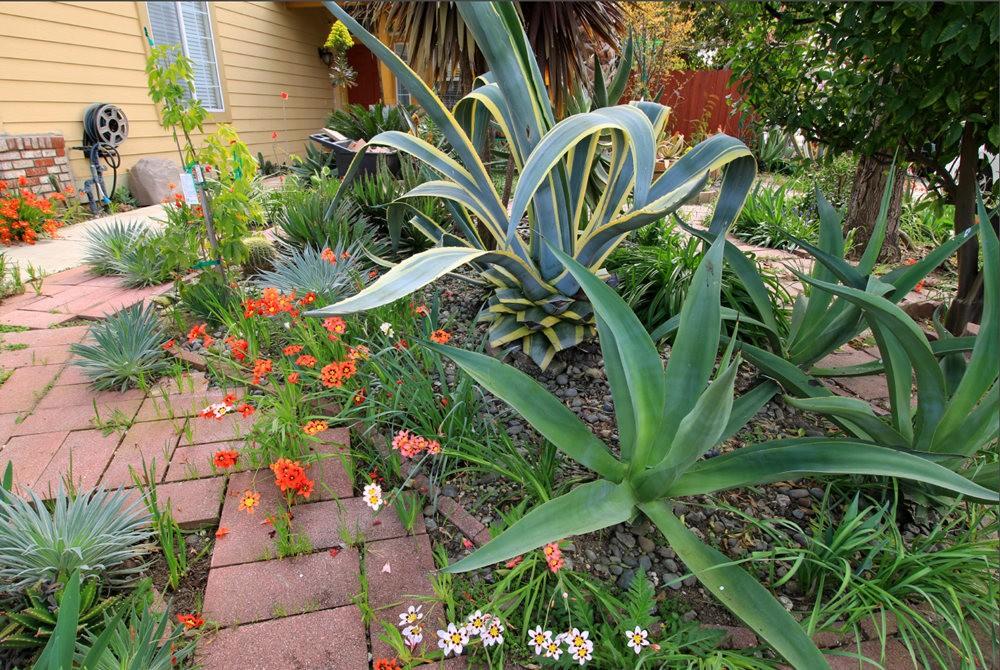 玛塔家庭旅馆花园放大版_图1-5