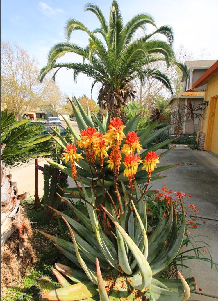 玛塔家庭旅馆花园放大版_图1-15