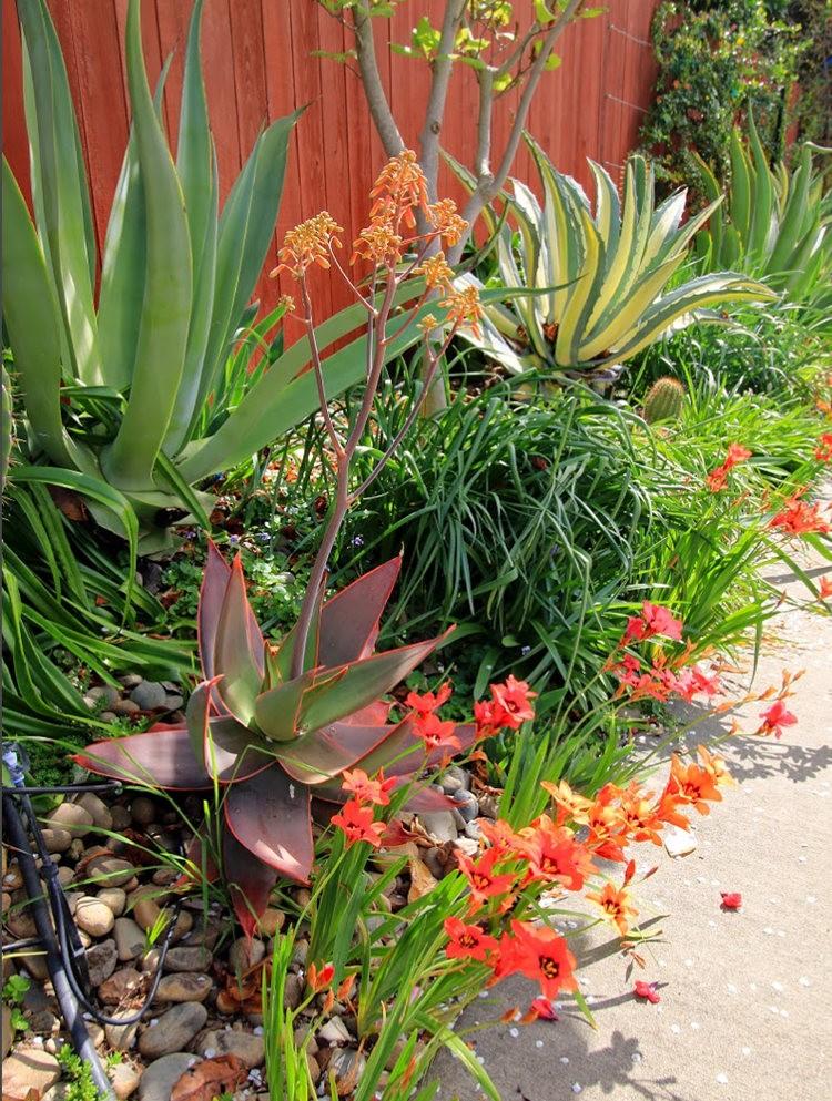 玛塔家庭旅馆花园放大版_图1-24