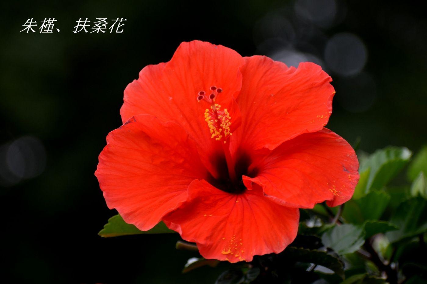 花草图谱 (3)_图1-1
