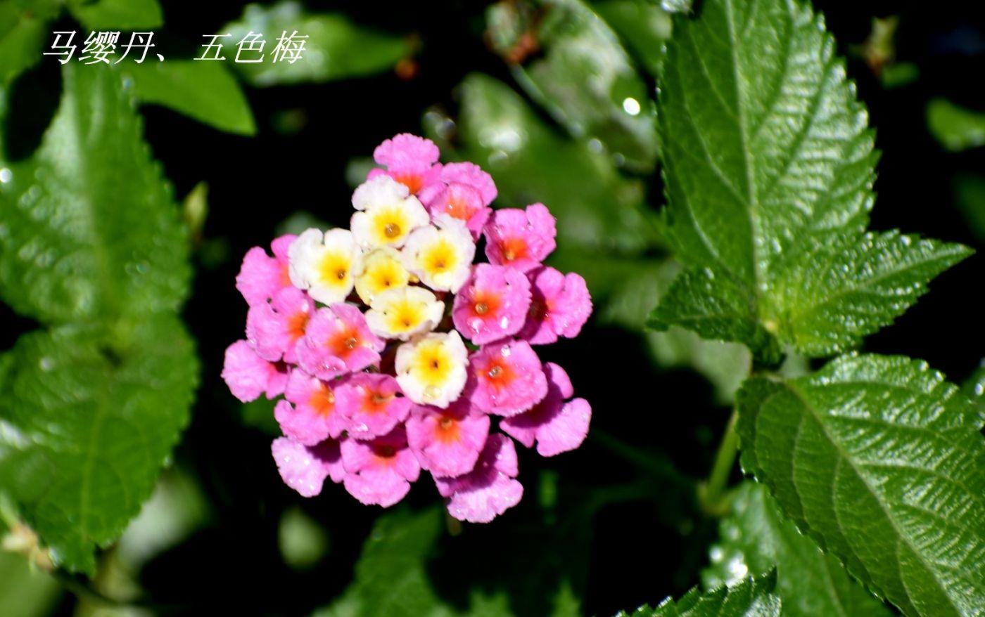 花草图谱 (3)_图1-4
