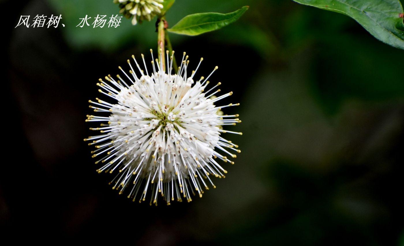 花草图谱 (3)_图1-5