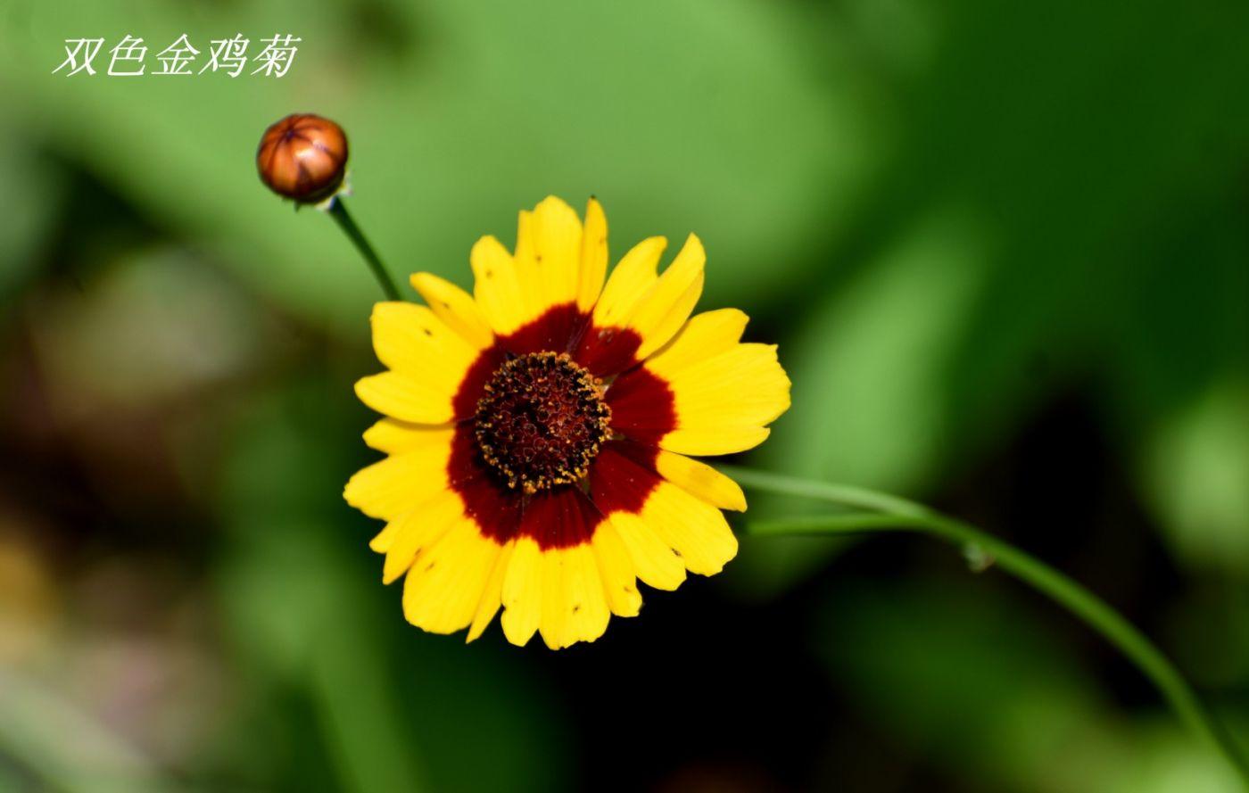 花草图谱 (3)_图1-6