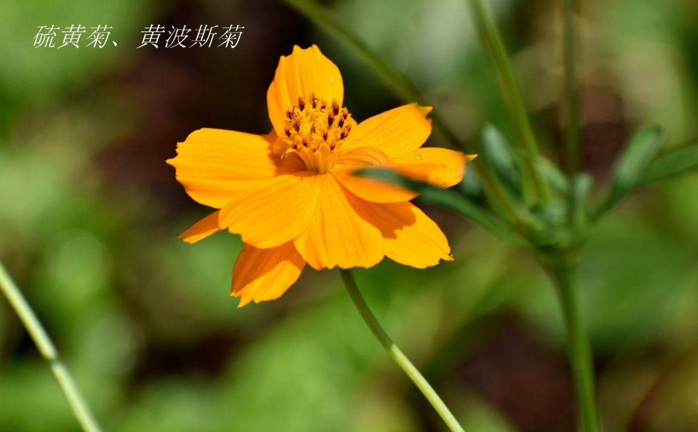花草图谱 (3)_图1-8
