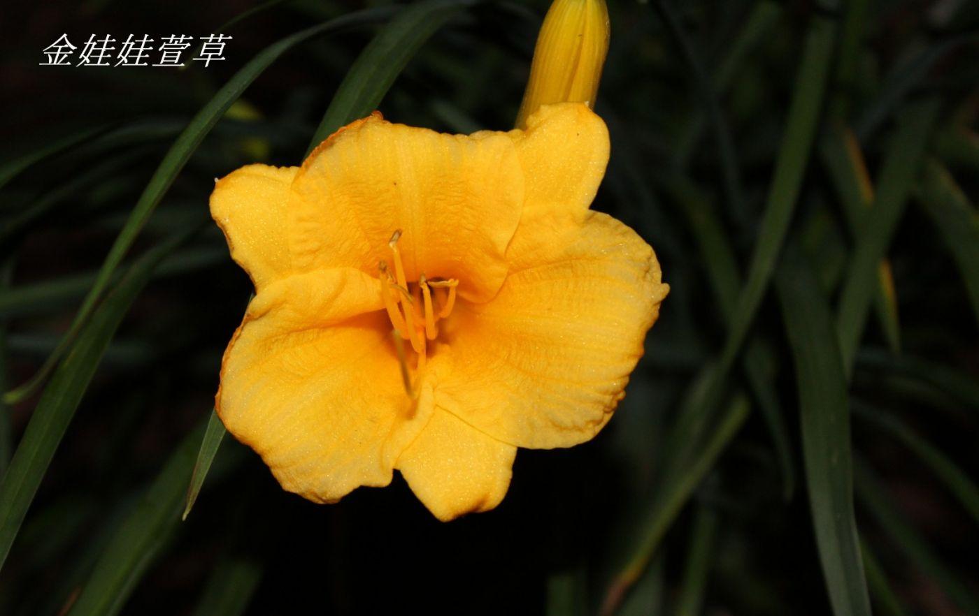 花草图谱 (3)_图1-16
