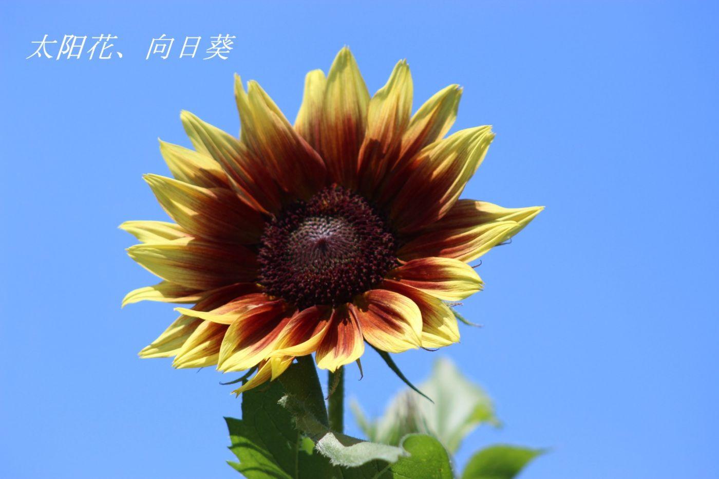 花草图谱 (3)_图1-20