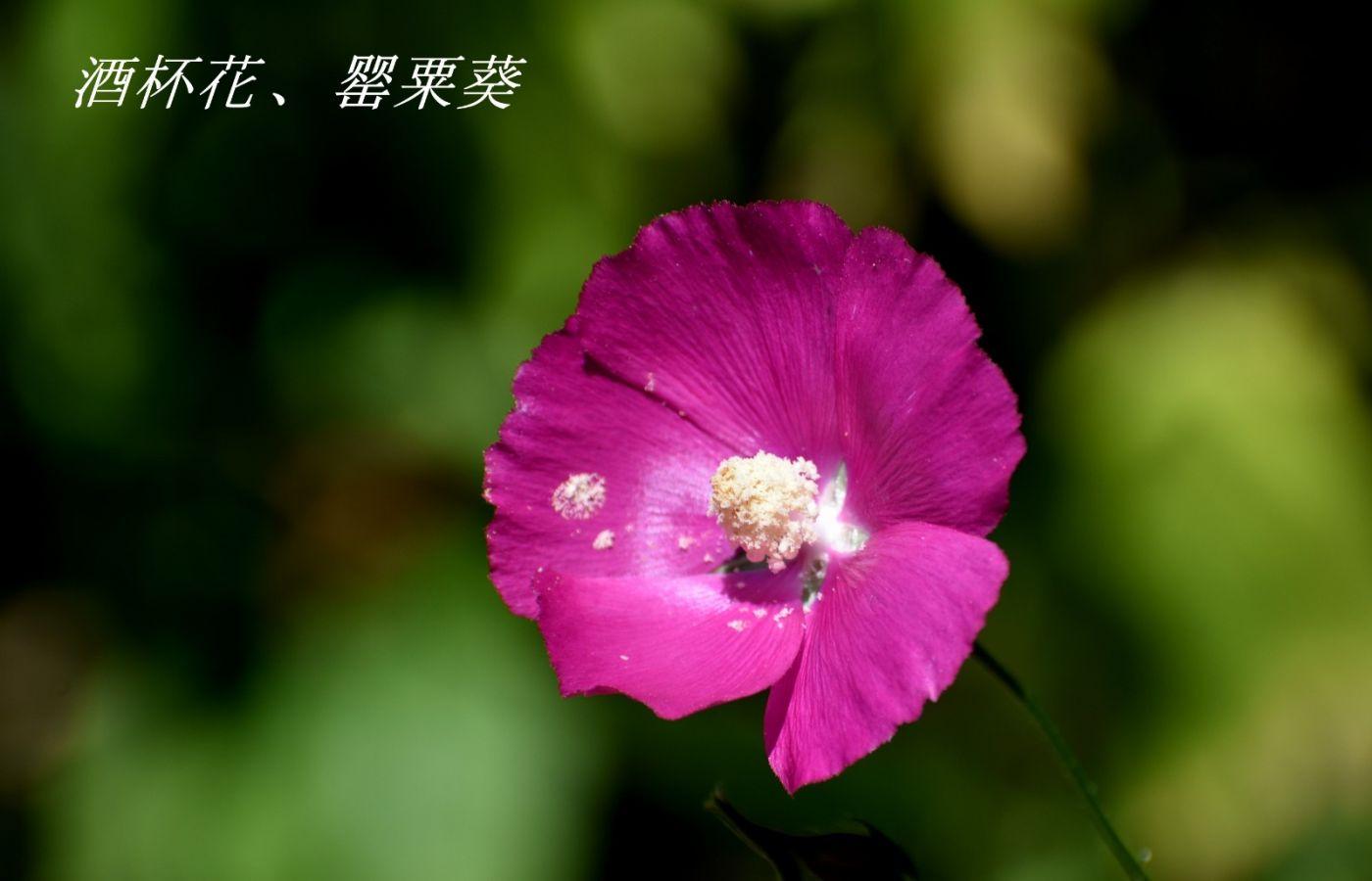 花草图谱 (3)_图1-27