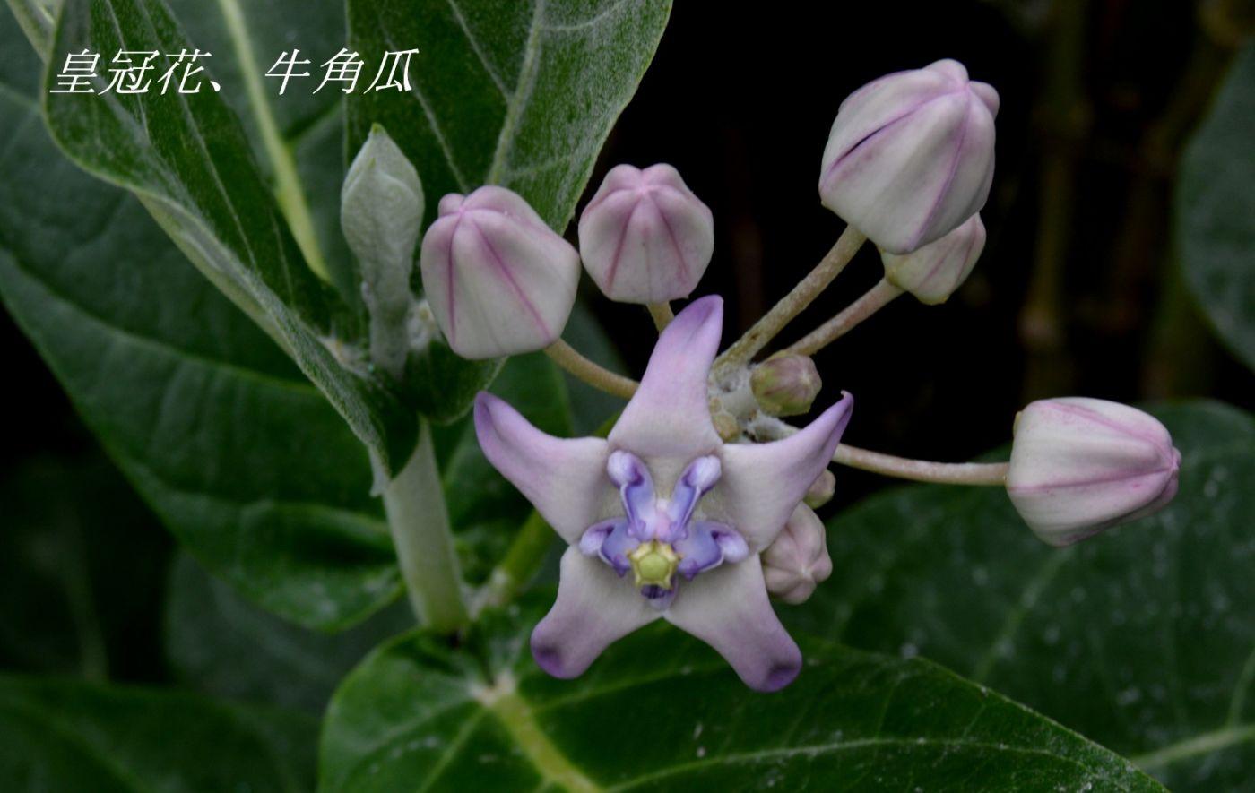 花草图谱 (3)_图1-29