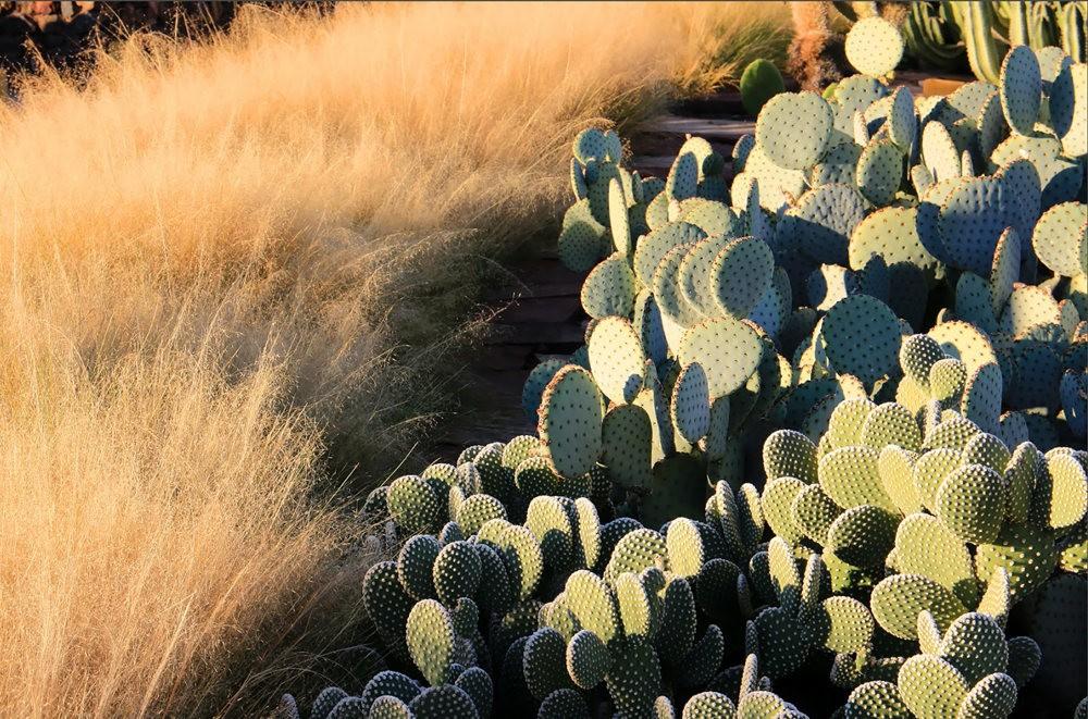 凤凰城沙漠植物园_图1-7