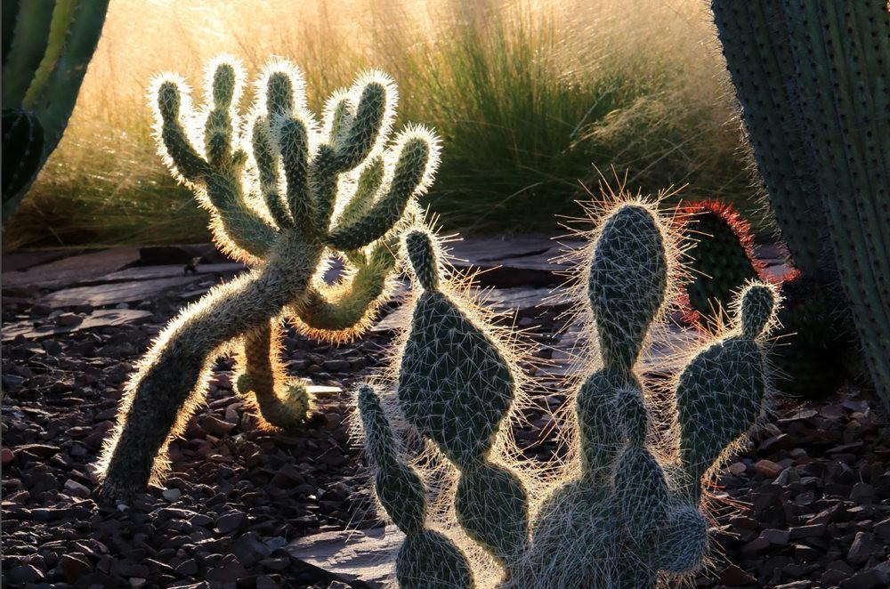 凤凰城沙漠植物园_图1-8