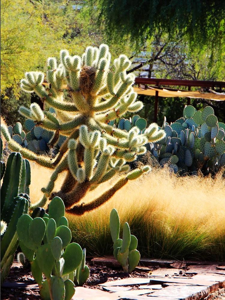 凤凰城沙漠植物园_图1-10