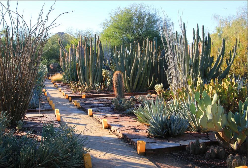 凤凰城沙漠植物园_图1-11