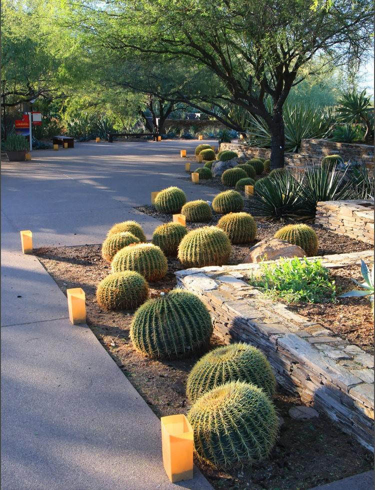 凤凰城沙漠植物园_图1-14