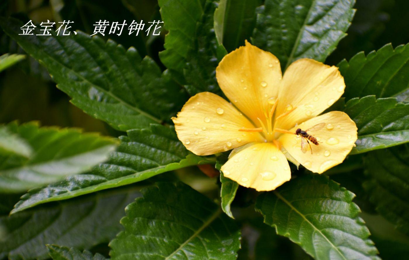 花草图谱 (4)_图1-1