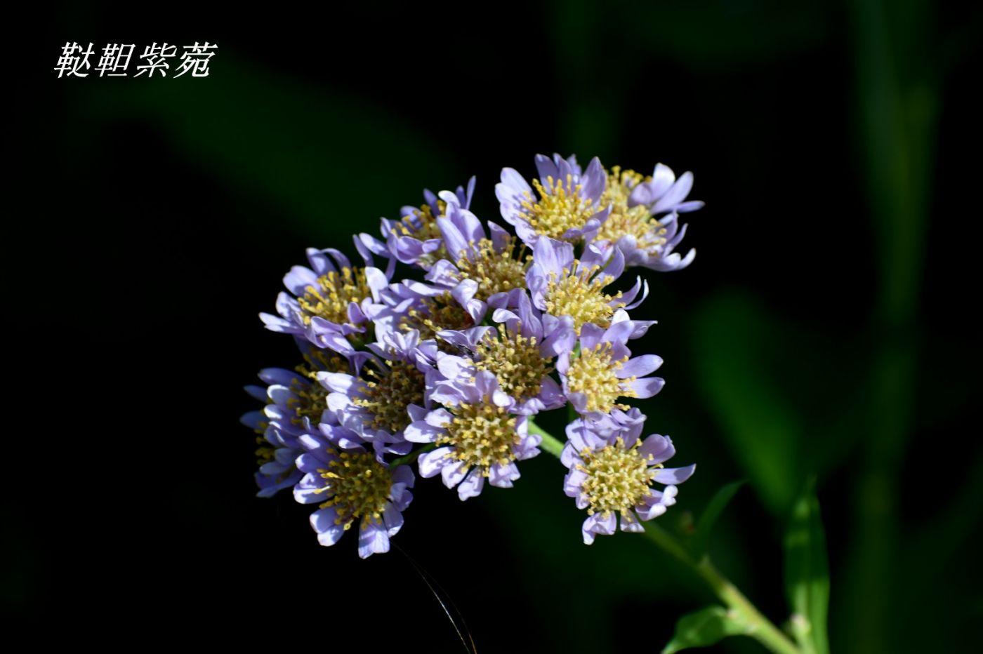 花草图谱 (4)_图1-19