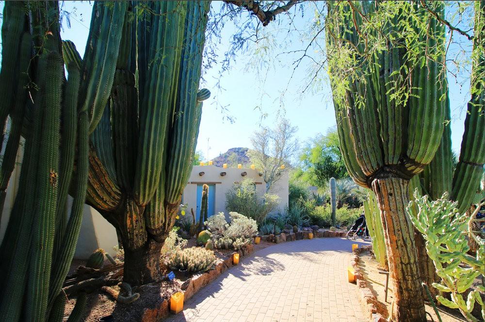 凤凰城沙漠植物园---2_图1-1