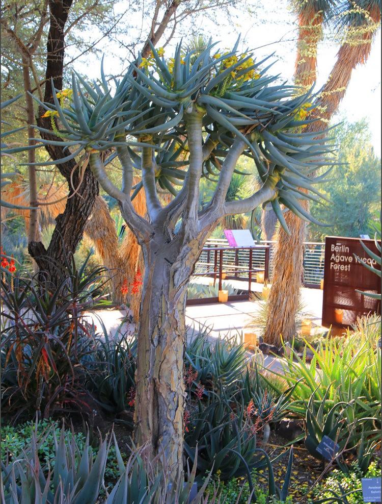 凤凰城沙漠植物园---2_图1-2