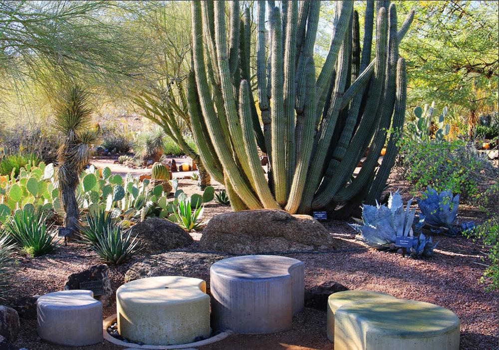 凤凰城沙漠植物园---2_图1-7