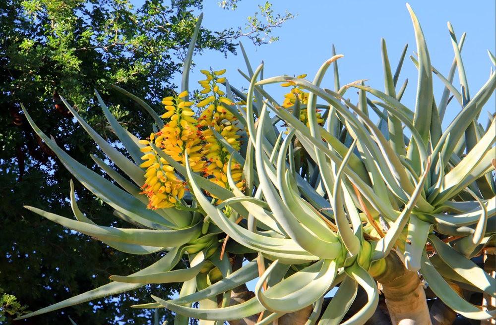 凤凰城沙漠植物园---2_图1-8