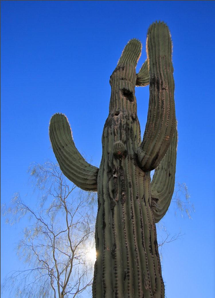 凤凰城沙漠植物园---2_图1-10