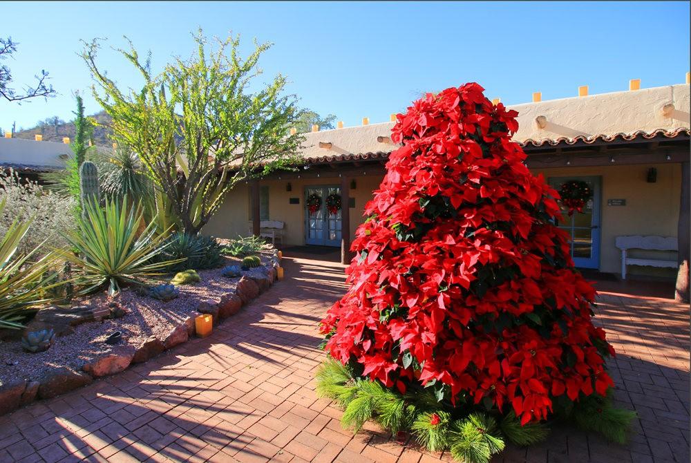 凤凰城沙漠植物园---2_图1-12