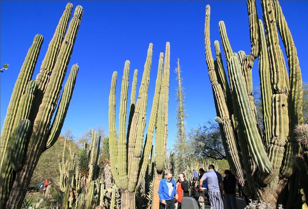 凤凰城沙漠植物园---2_图1-17
