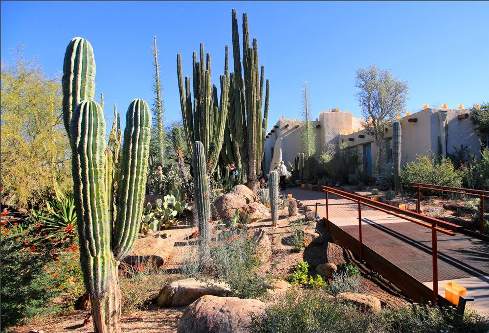 凤凰城沙漠植物园---2_图1-18