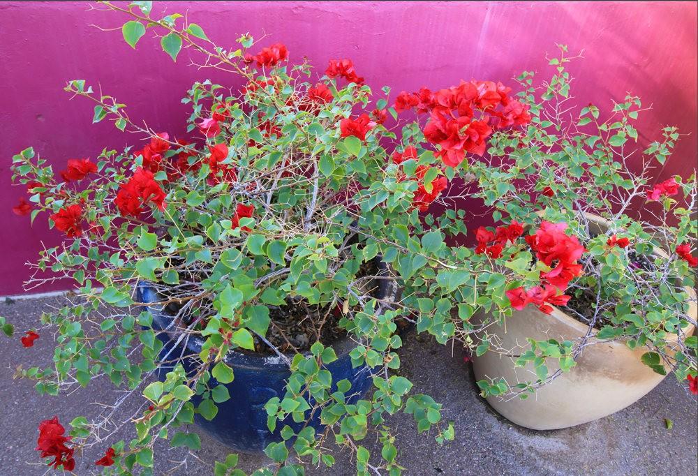 凤凰城沙漠植物园---2_图1-22