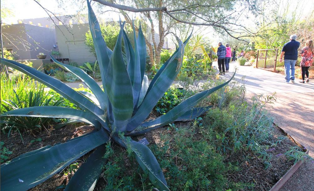 凤凰城沙漠植物园---2_图1-23