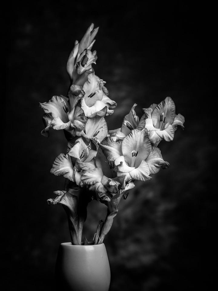 菖兰花,黑白感受_图1-1