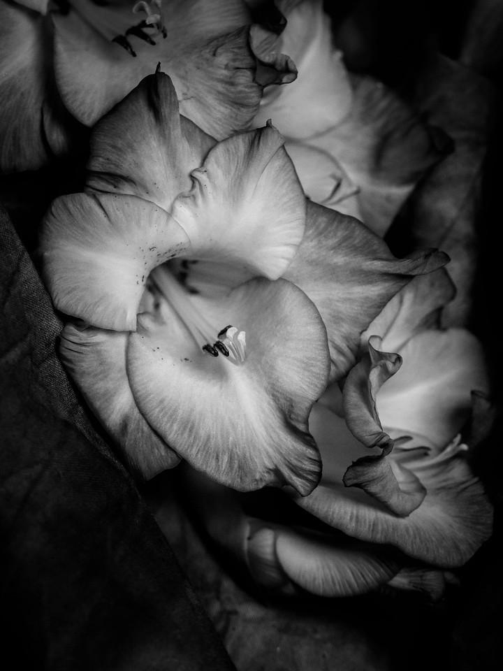 菖兰花,黑白感受_图1-4