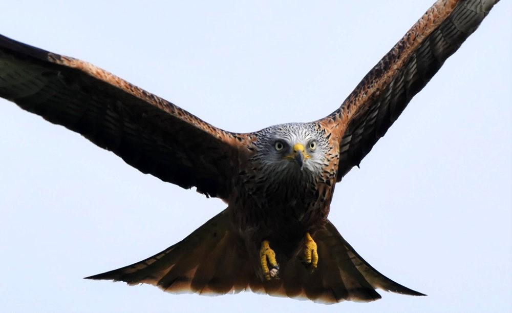 卡诺阿牧场野生动物保护区巡游---2_图1-7