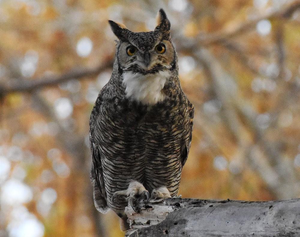 卡诺阿牧场野生动物保护区巡游---2_图1-8