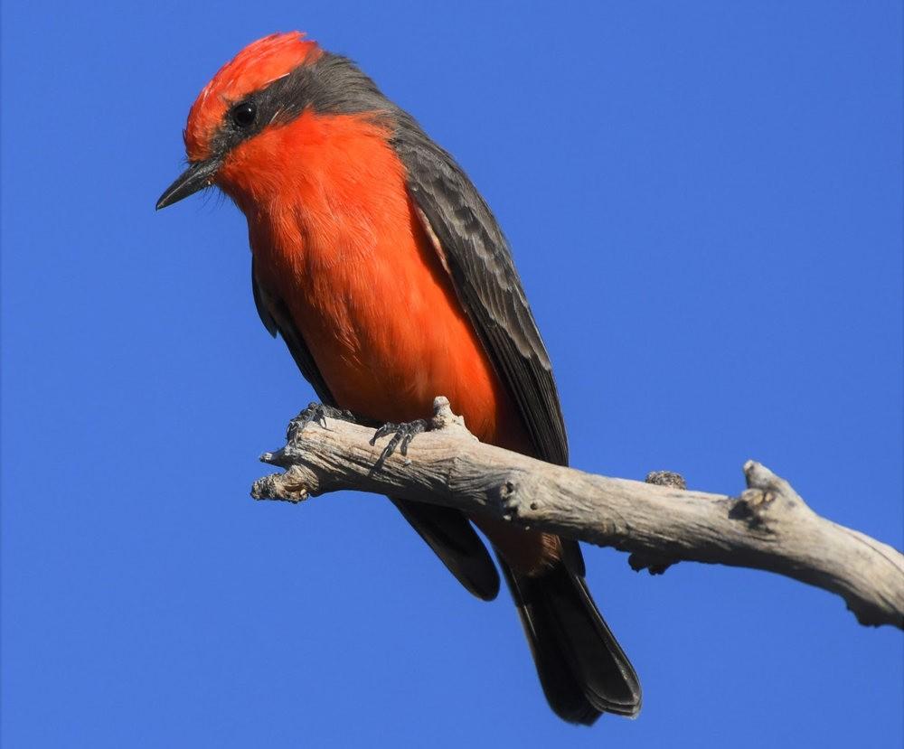 卡诺阿牧场野生动物保护区巡游---2_图1-10