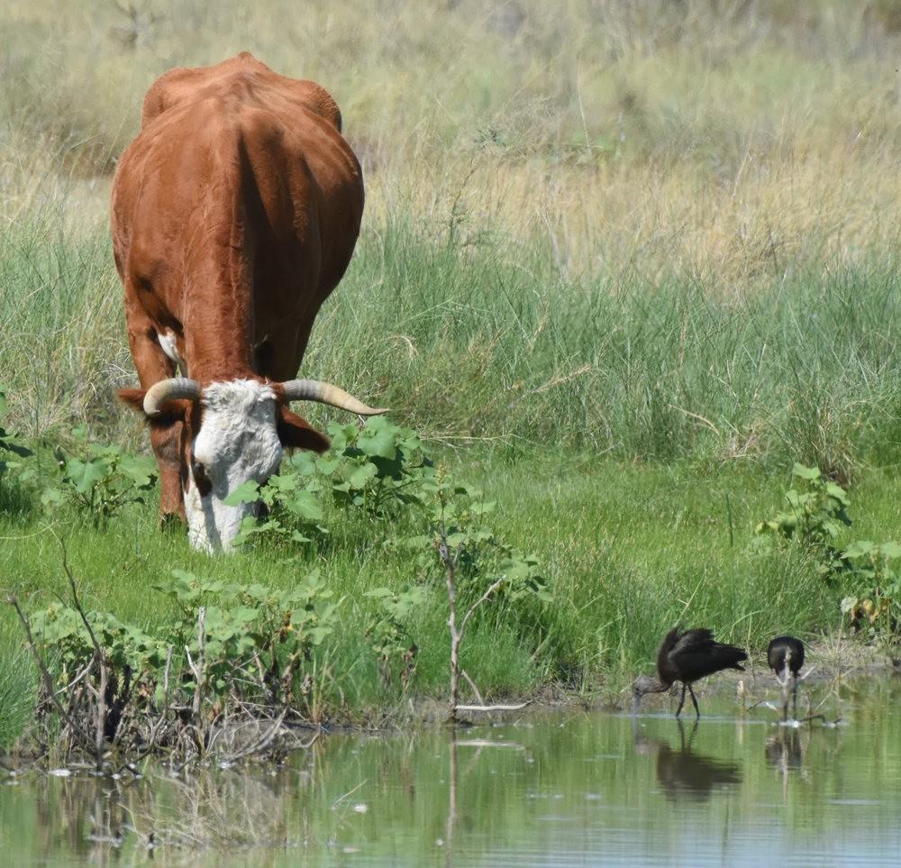 卡诺阿牧场野生动物保护区巡游---2_图1-12