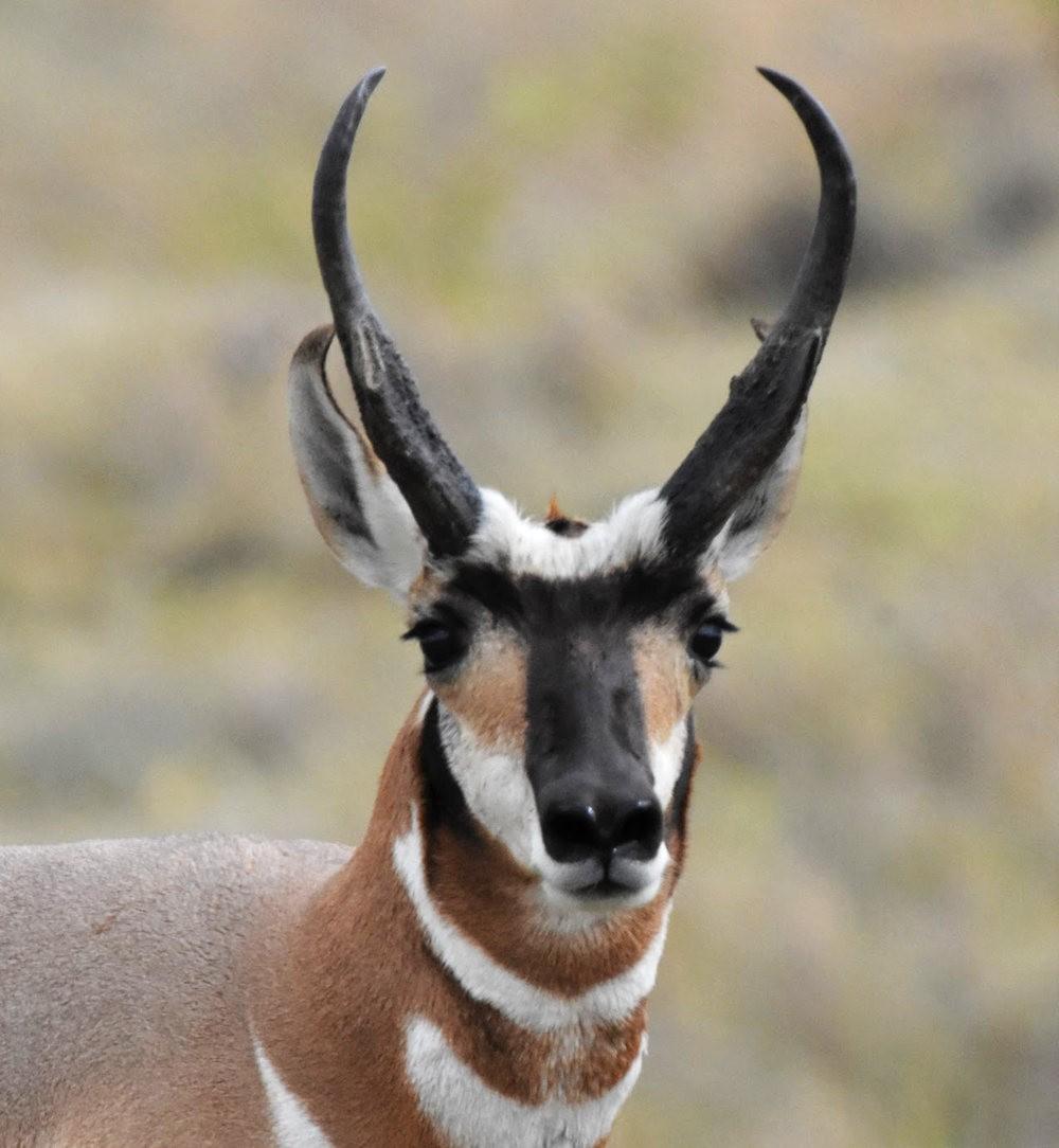 卡诺阿牧场野生动物保护区巡游---2_图1-14